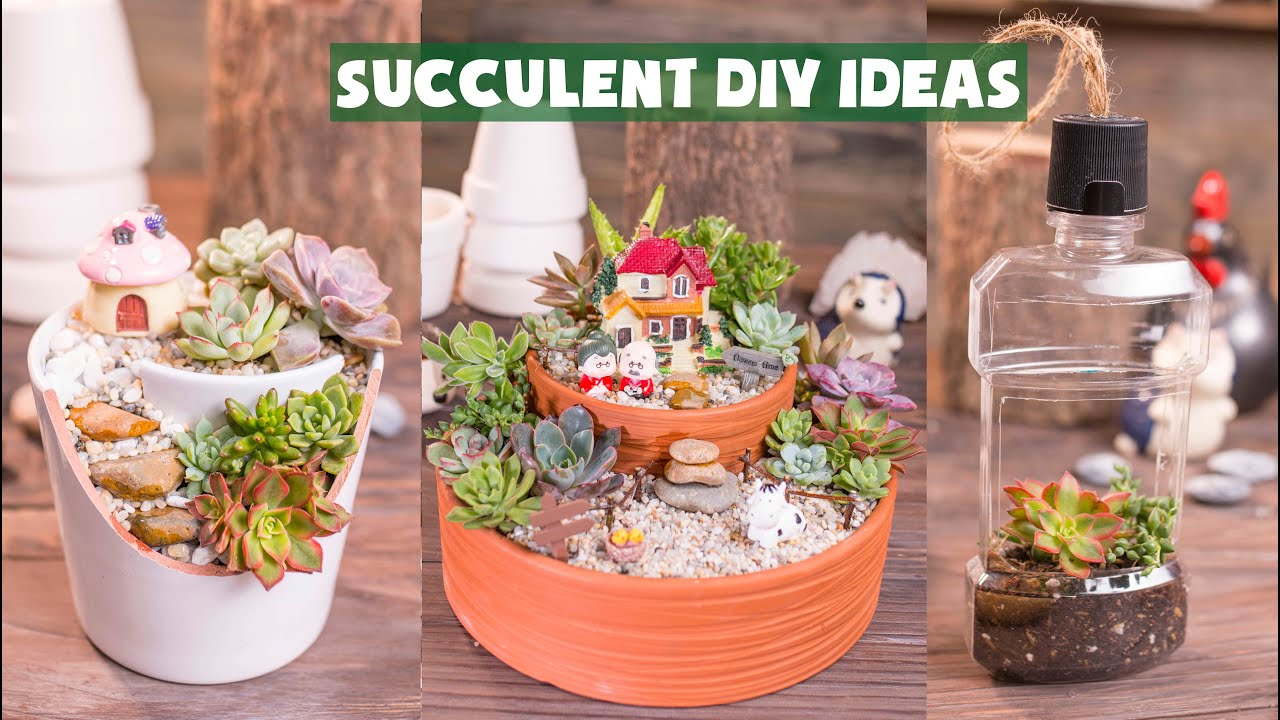 14 Succulent DIY Ideas| 14 Ý tưởng trang trí sen đá tuyệt đẹp| 多肉植物| 다육이들 | Suculentas