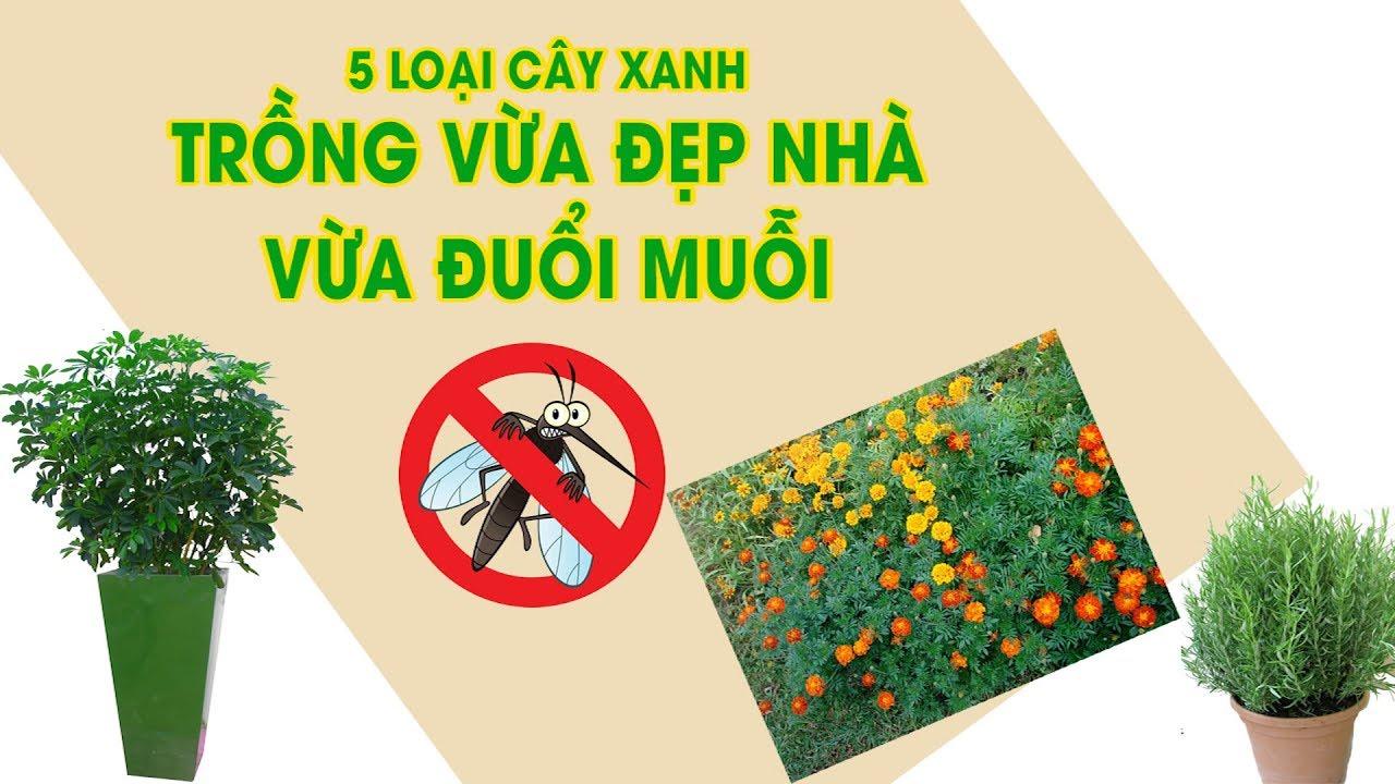 5 loại cây xanh trồng vừa đẹp nhà vừa đuổi muỗi