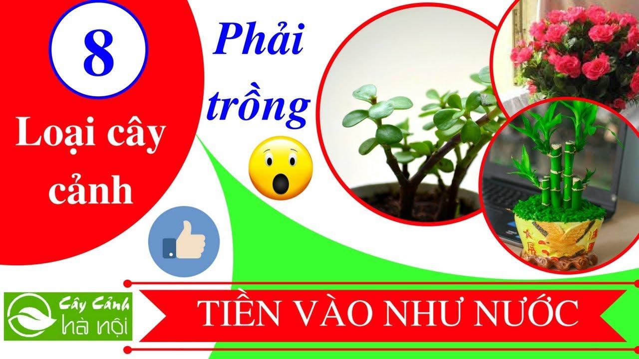 8 cây phải trồng trong nhà để tiền vào như nước