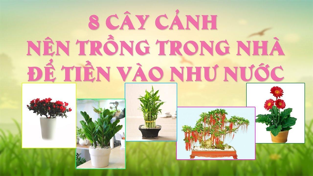 8 loại cây cảnh nên trồng trong nhà để tiền vào như nước