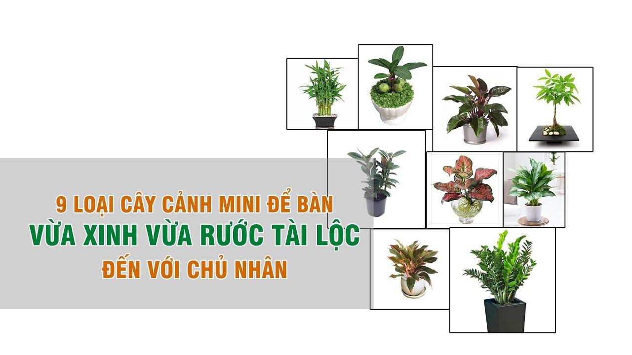 9 loại cây cảnh mini để bàn vừa xinh vừa rước tài lộc đến với chủ nhân