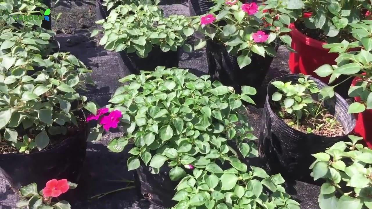 Báo giá các loại hoa đông chơi tết | S Garden