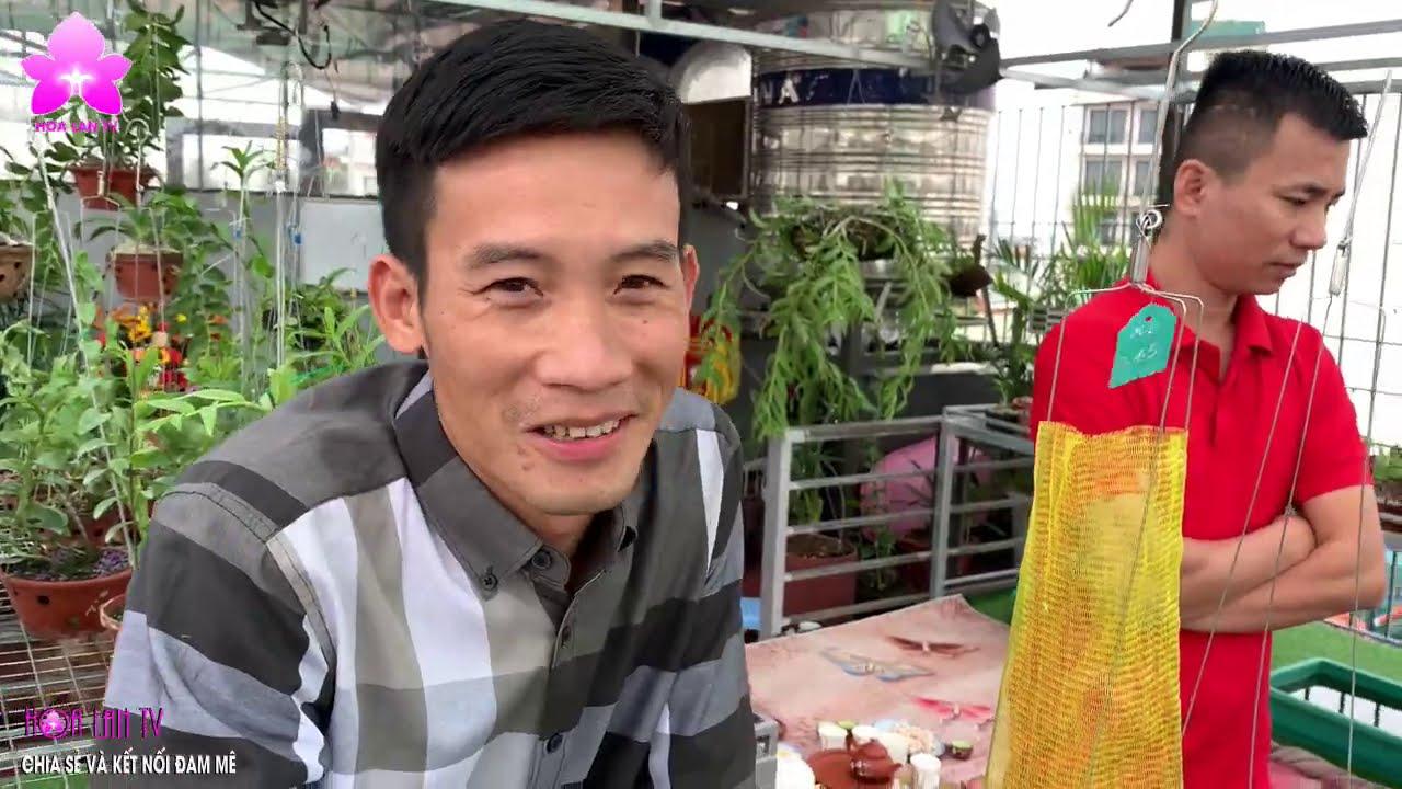 Bất Ngờ Với Vườn Lan Sân Thượng tầng 7 bên Hồ Tây | HOALANTV