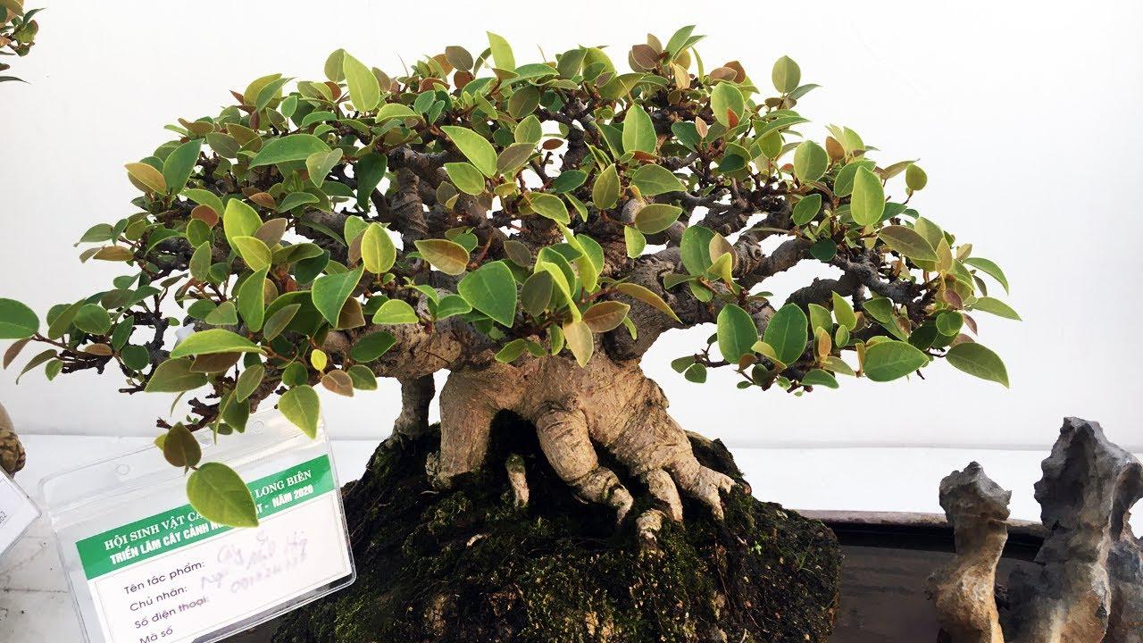 Bonsai collection  - Triển lãm bonsai