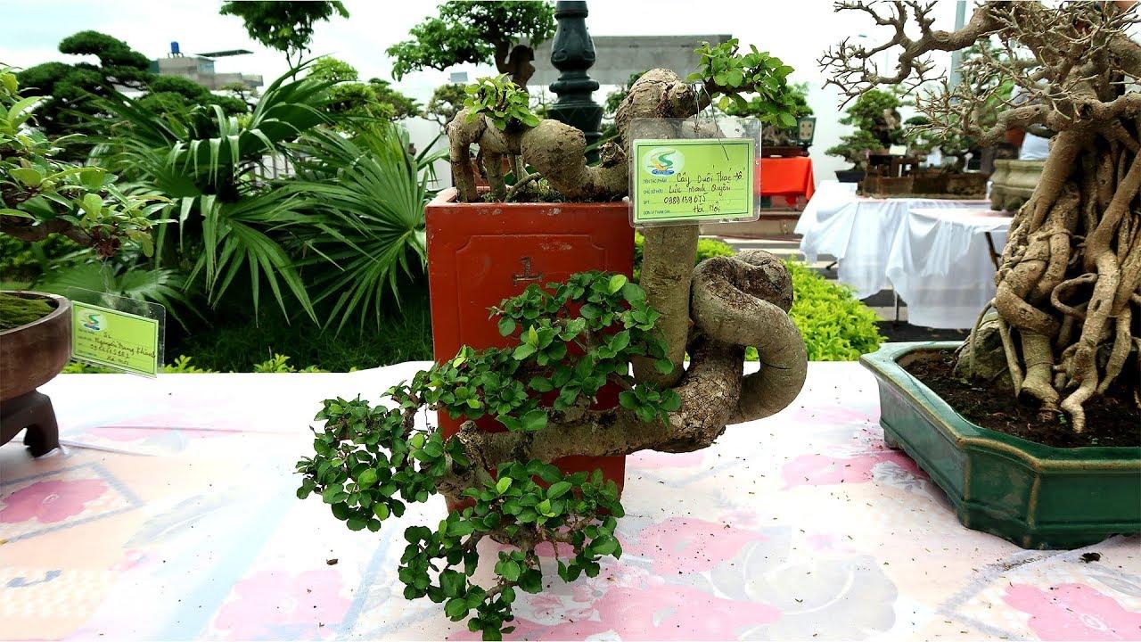 Bonsai đỉnh cao, những siêu phẩm đẹp
