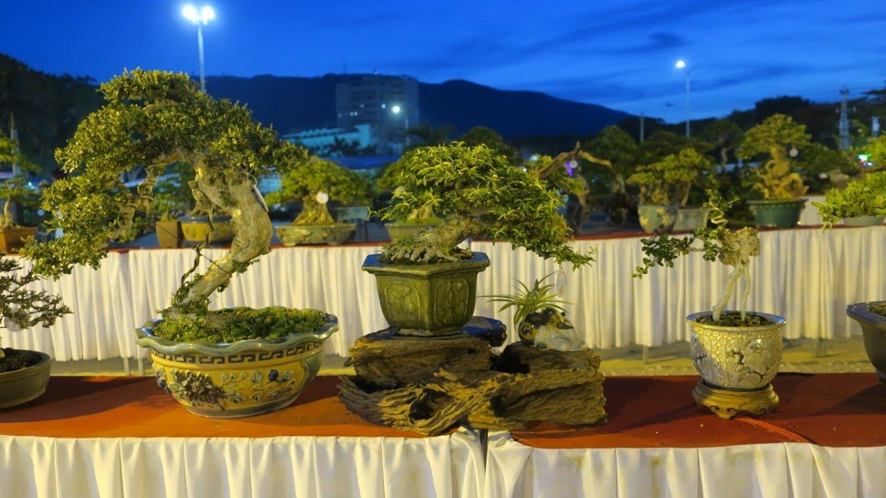 Bonsai siêu mini về đêm tại Thành phố Biển Quy Nhơn ( triển lãm svc lần lll)