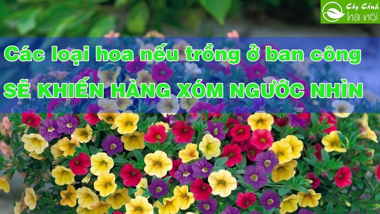 Các loại hoa nếu trồng ở ban công sẽ khiến hàng xóm phải ngước nhìn