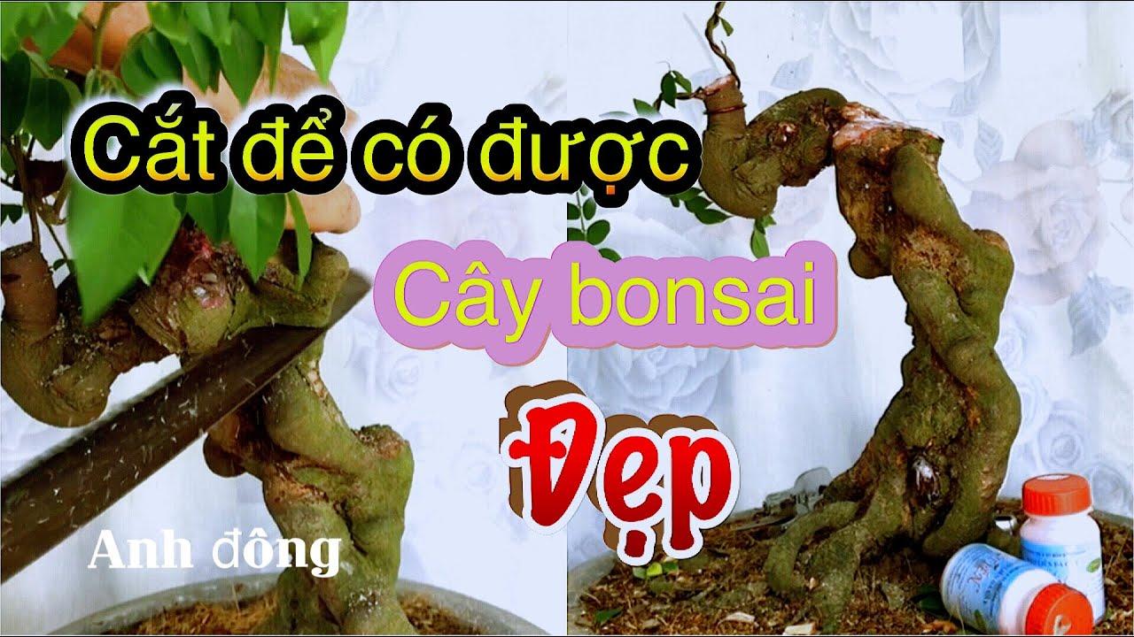 Cắt để có được cây bonsai đẹp