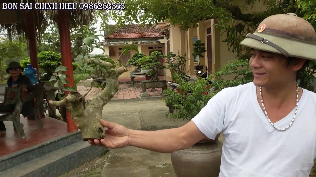 Cắt ngọn Sanh Nam Điền bán 200 K và một số cây mini giá rẻ bất ngờ..