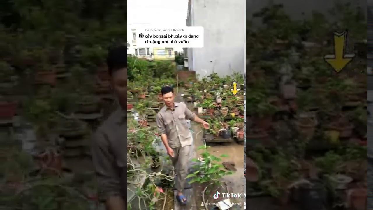 Cây Bonsai Hot Nhất Thị Trường Hiện Nay  | Tiktok CÂY CẢNH CHỢ HÀNG | Hải Phòng