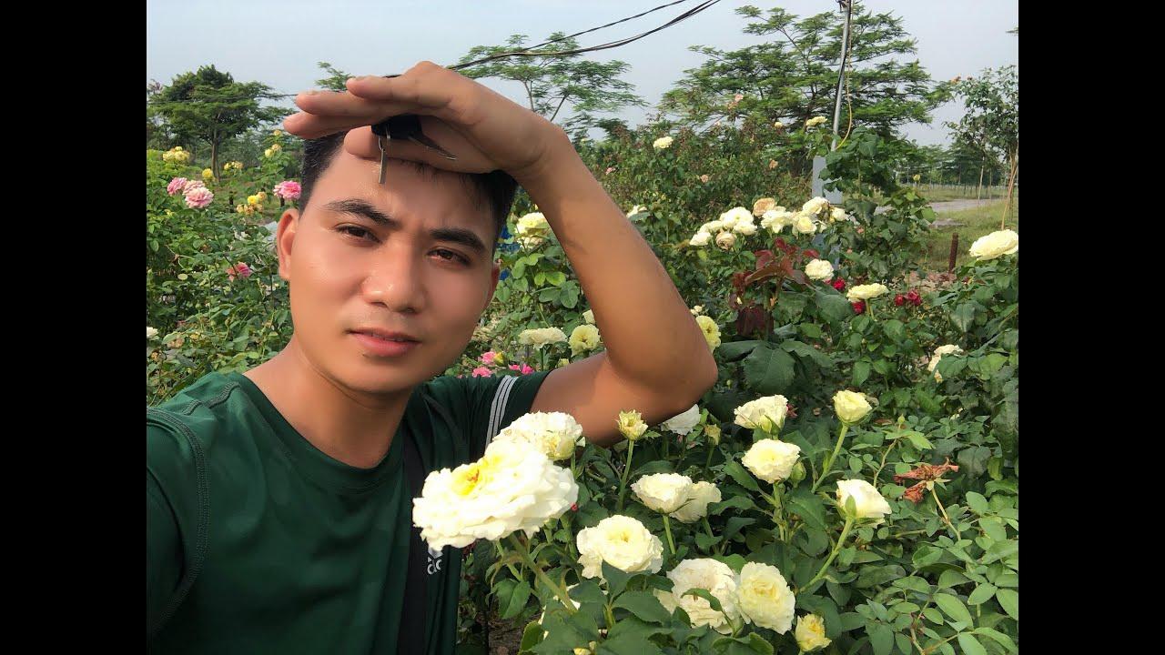 Cùng ngắm vườn hồng ngoại lớn và thư giãn cuối tuần