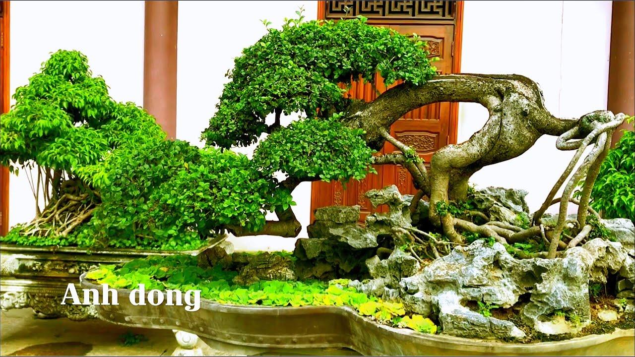 Độc lạ những cây bonsai