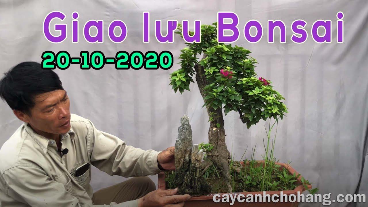 Giao lưu Bonsai 20-10 | 0981.0981.72 | Tiktok CÂY CẢNH CHỢ HÀNG | Hải Phòng