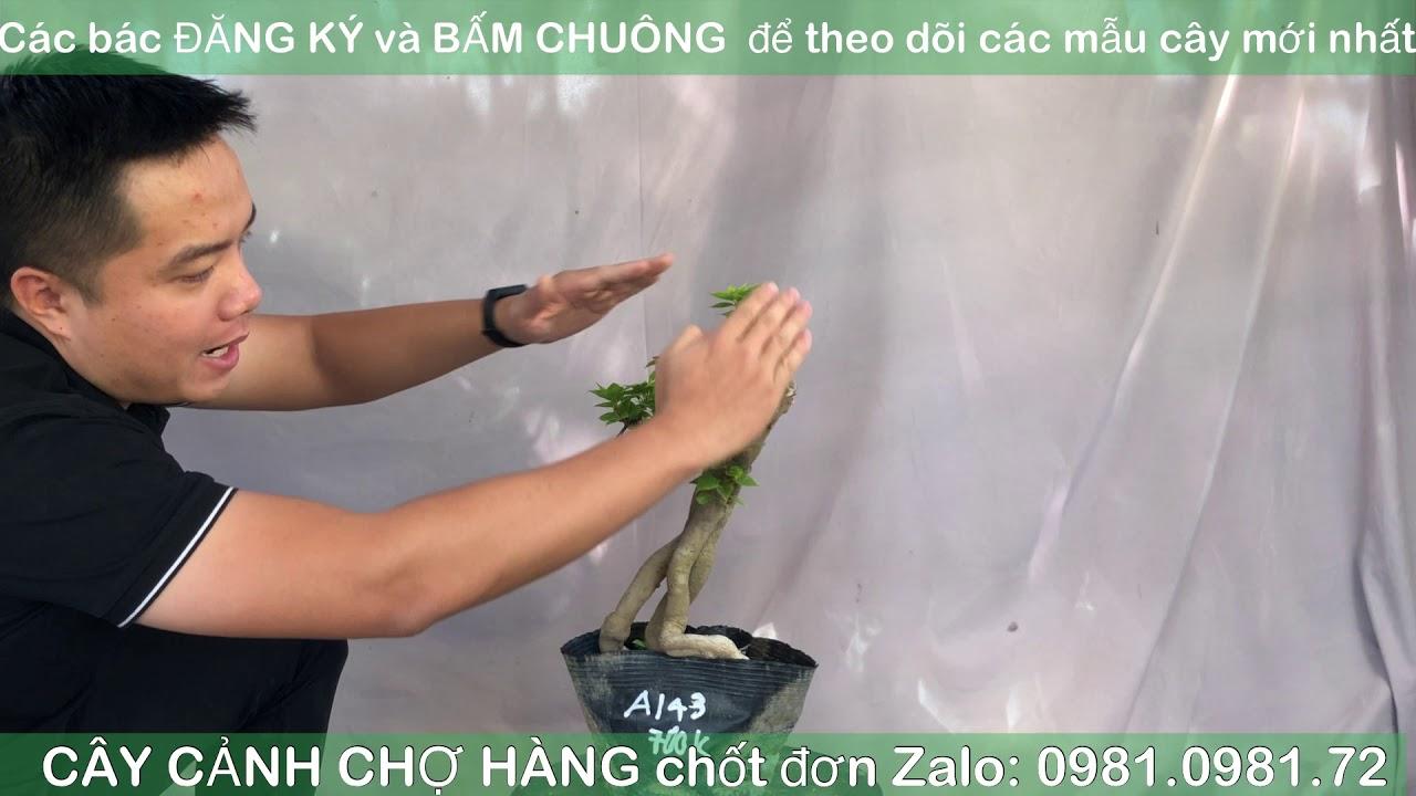 Giao lưu bonsai | 0981.0981.72 | 23-10-2020 | Tiktok CÂY CẢNH CHỢ HÀNG | Hải Phòng