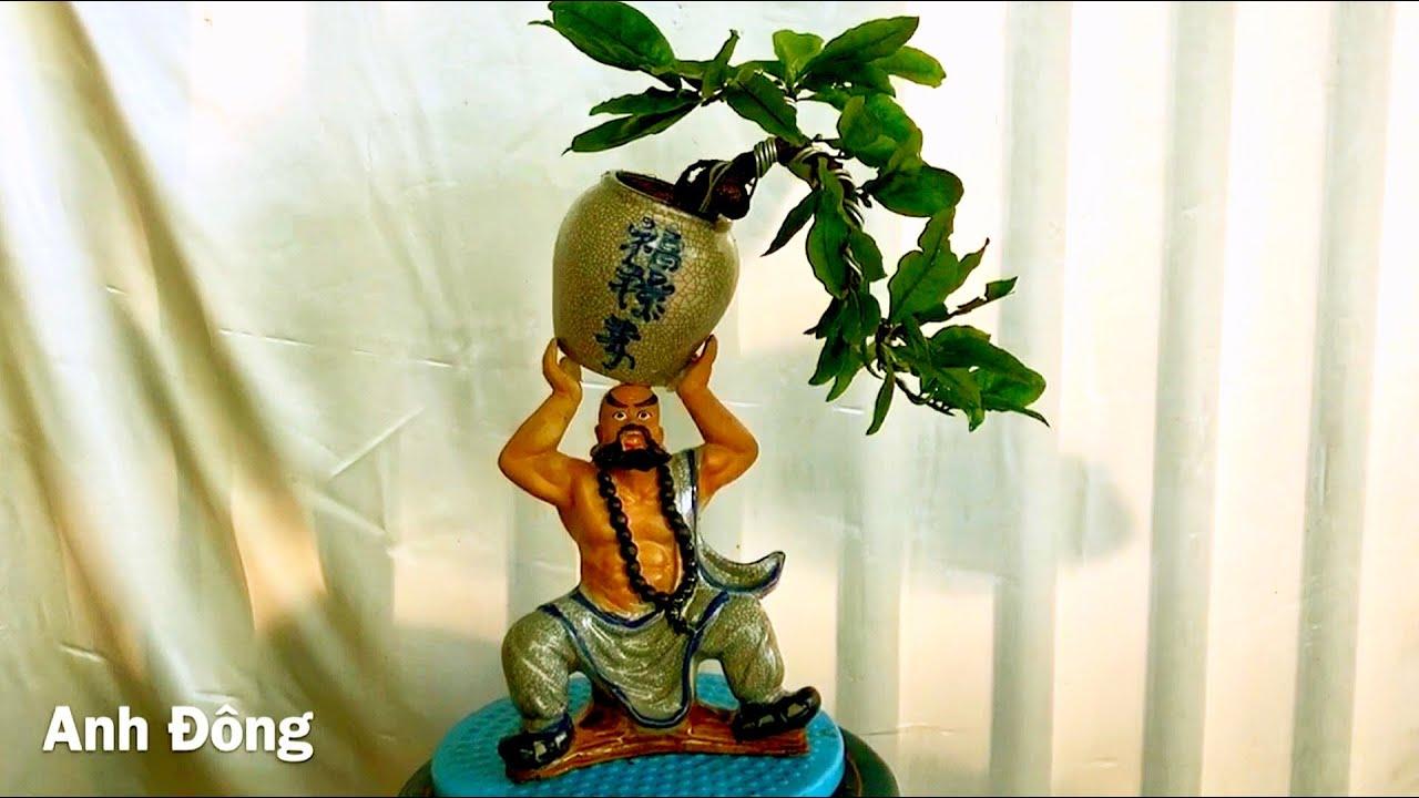 Mai bonsai mini chơi tết