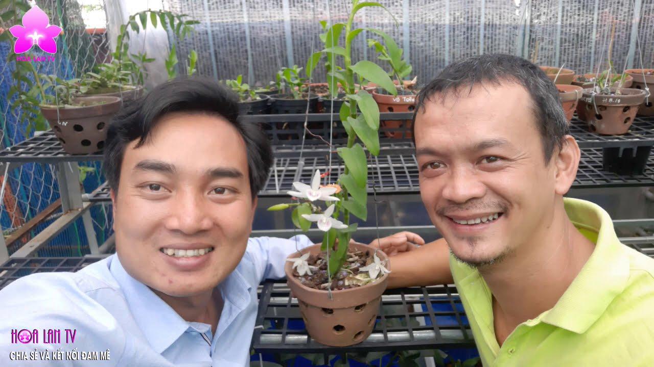 Ngắm Phi Điệp Đột Biến 5CT QUỐC DÂN Tại ''Lan Vườn Bảo Lộc''