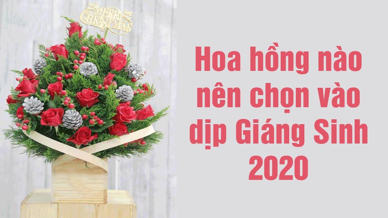 Những bông hồng thích hợp để tặng trong dịp giáng sinh 2020