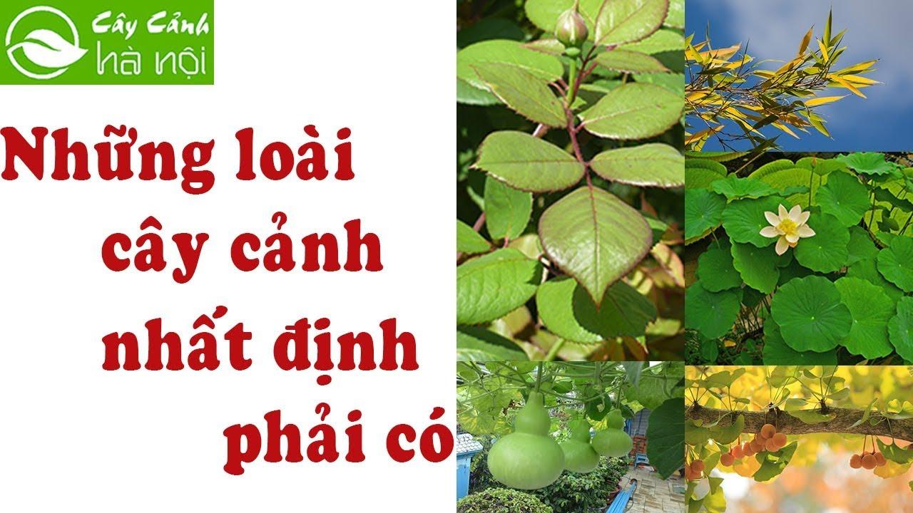 Những loại cây nhất định phải có trong vườn nhà