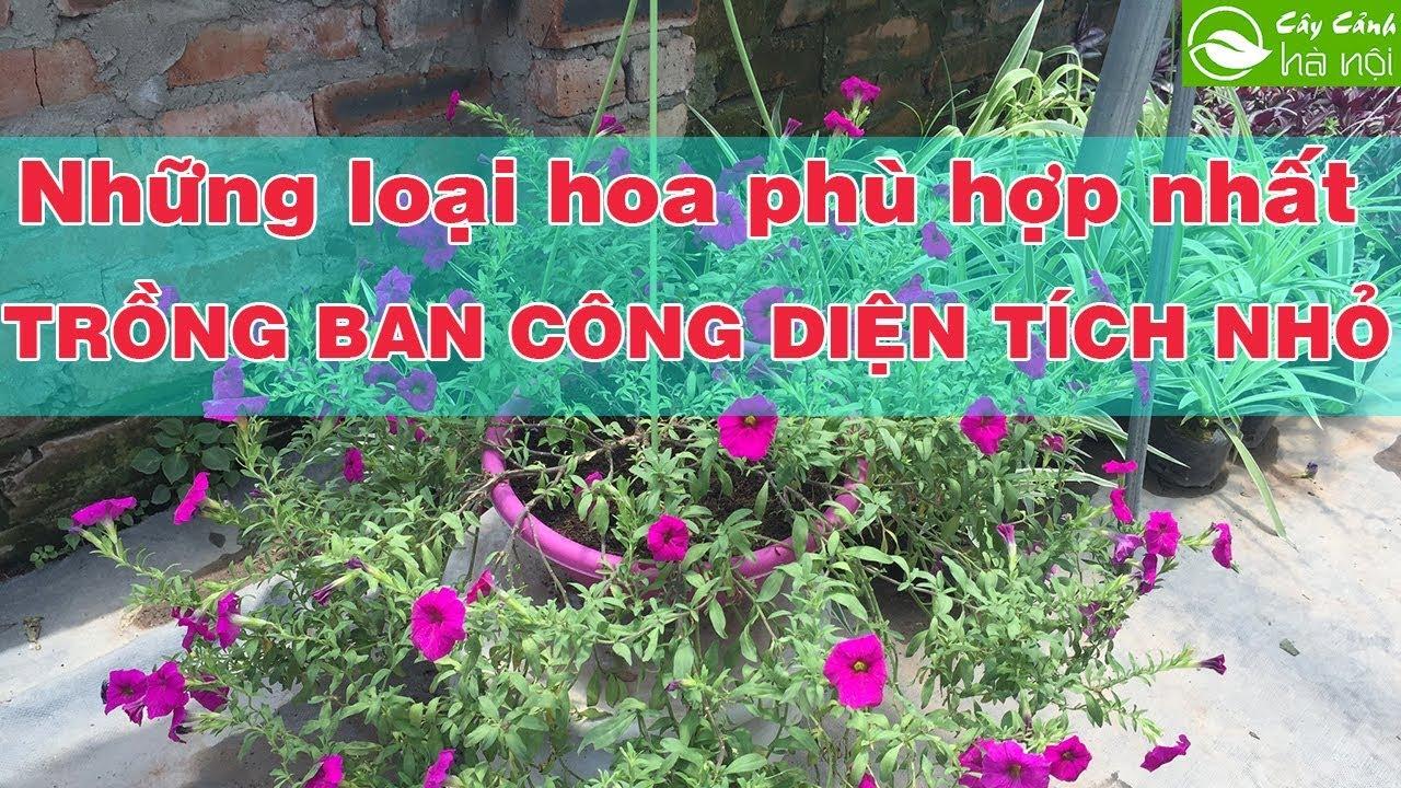 Những loài hoa phù hợp nhất để trồng ở ban công có diện tích nhỏ