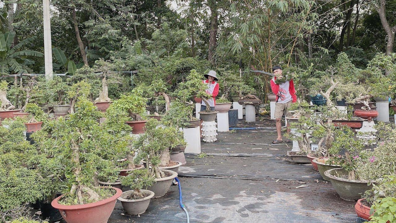 Pan City 222 | Clip đặc biệt lên sóng toàn những cây khủng , cây to giá thanh lý