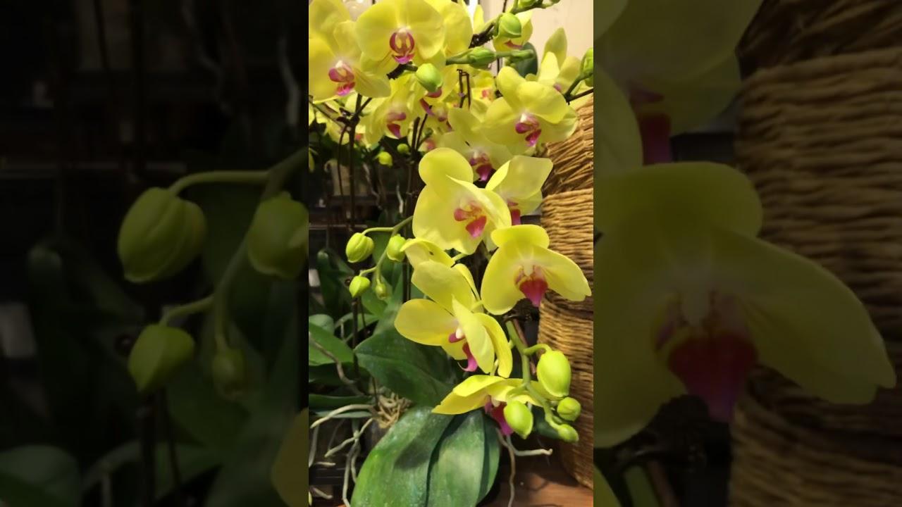 Siêu Thị Hoa Lan Hồ Điệp Hà Nội chuẩn bị hoa cho ngày lễ 20/10 tràn ngập hoa