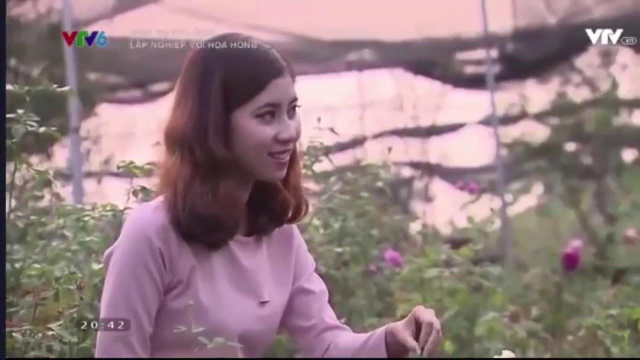 Sinh ra từ làng - Phạm Thiên Trang   Nhân giống và bảo tồn hoa hồng cổ
