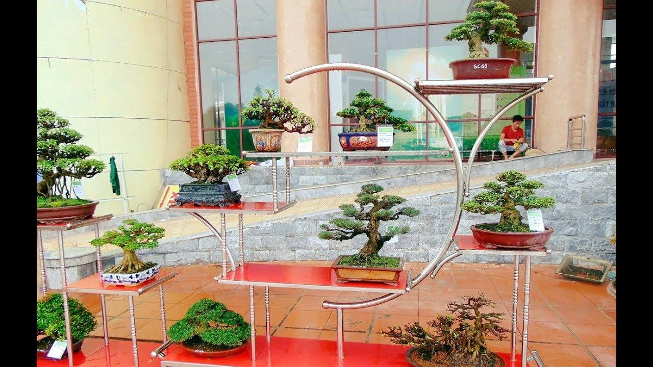 Toàn cảnh các tác phẩm Bonsai ở Triển Lãm Sông Cầu, Bắc Ninh