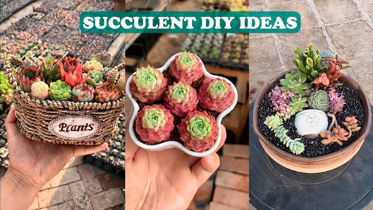 Top 27 Succulent DIY Ideas| 27 ý tưởng trang trí sen đá| 多肉植物| 다육이들 | Suculentas