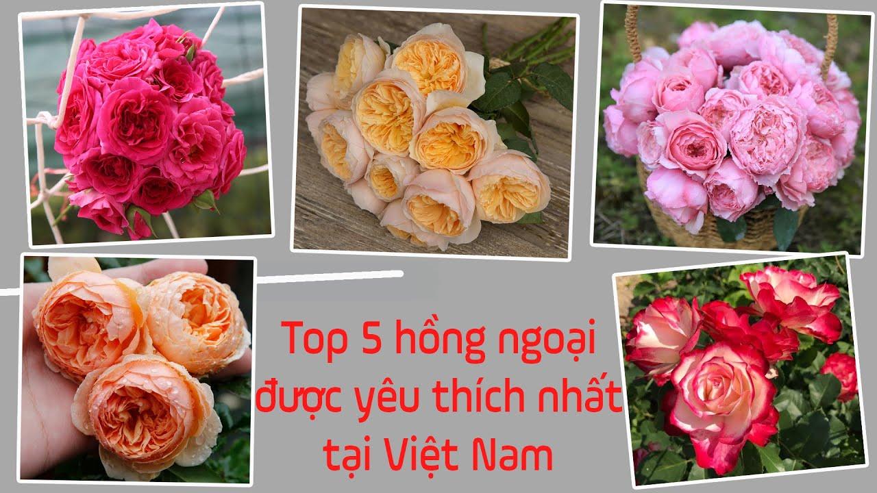 Top 5 giống hồng ngoại được yêu thích nhất tại Việt Nam