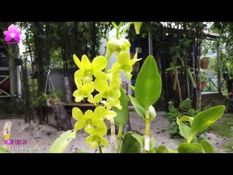Trải Nghiệm Với Vườn LAN GECKO HOMESTAY Bãi Bổn Phú Quốc [HOALANTV]