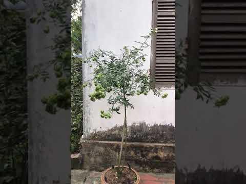 Tree reny green