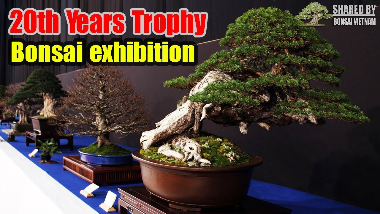 Triển lãm Bonsai Trophy lần thứ 20 năm 2019 tại Bỉ