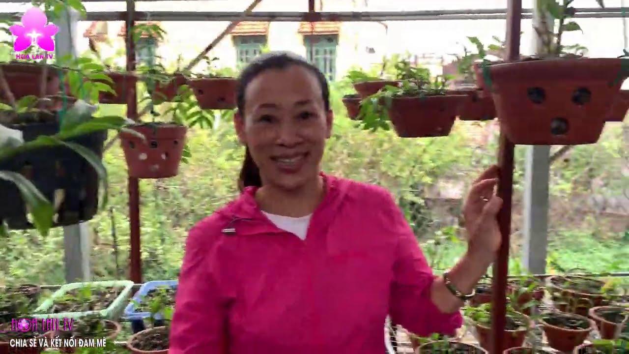 Vườn Đậm Chất Chơi Thú Vị Của Đôi Vợ Chồng Yêu Lan Tại Gia Lâm Hà Nội | HOALANTV