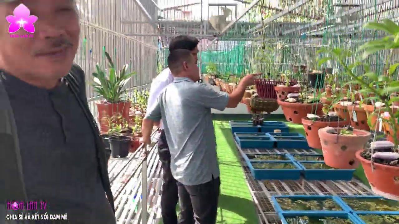 Vườn Lan CÔNG VŨ - 3 Cái Bắt Tay, Bay Ngay Hơn 8 tỷ đồng!