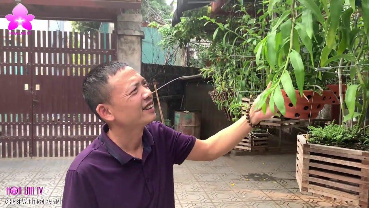 """Vườn Lan Giữa ''Miệt Vườn"""" ở Hà Nội - Thỏa Chí Đam Mê"""