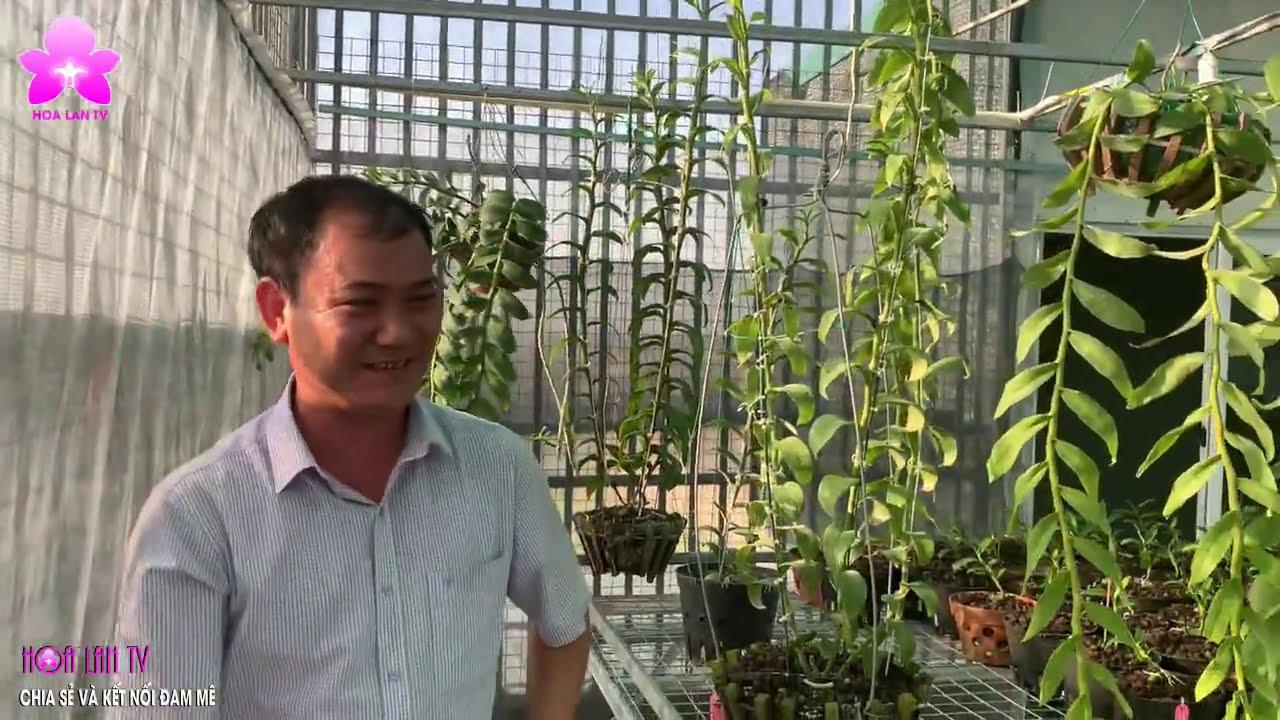 Vườn Lan TẠ DUY LĨNH Lột Xác Với Nhiều Giống Lan ĐỘT BIẾN Có Giá Trị