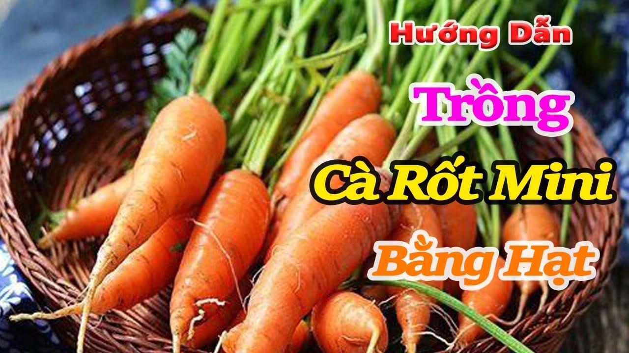 hướng dẫn trồng cà rốt mini bằng hạt