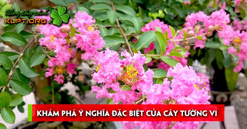 kham-pha-y-nghia-dac-cua-cay-tuong-vi