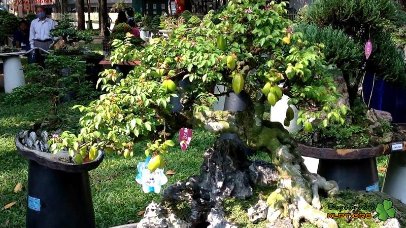 nhung-cach-tao-the-cay-kieng-bonsai-klpt