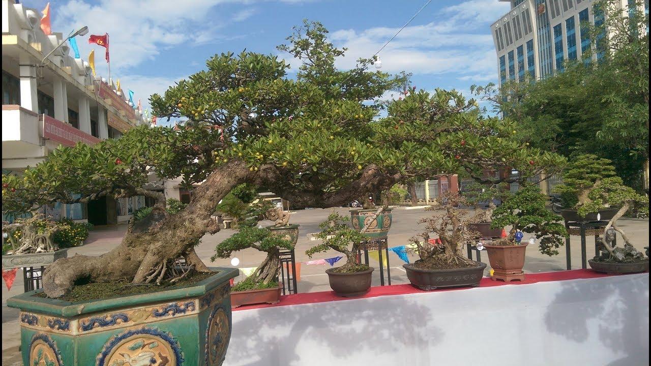 Triển lãm cây cảnh Bonsai Quy Nhơn 2018 - phần 3 - Bonsai Binh Dinh