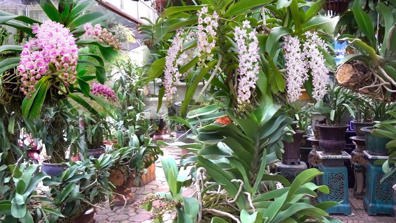 40 nghìn là có giò lan đẹp, quá nhiều lan quý có ở đây - beautiful orchids at bonsai market