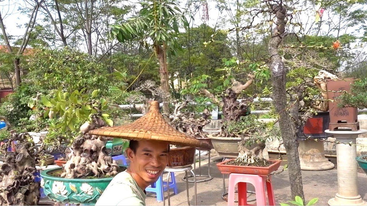 Anh Dũng báo giá đơn, sanh, si, linh sam ở hội chợ Phúc Thọ - Mrs Dung notices the price of bonsai