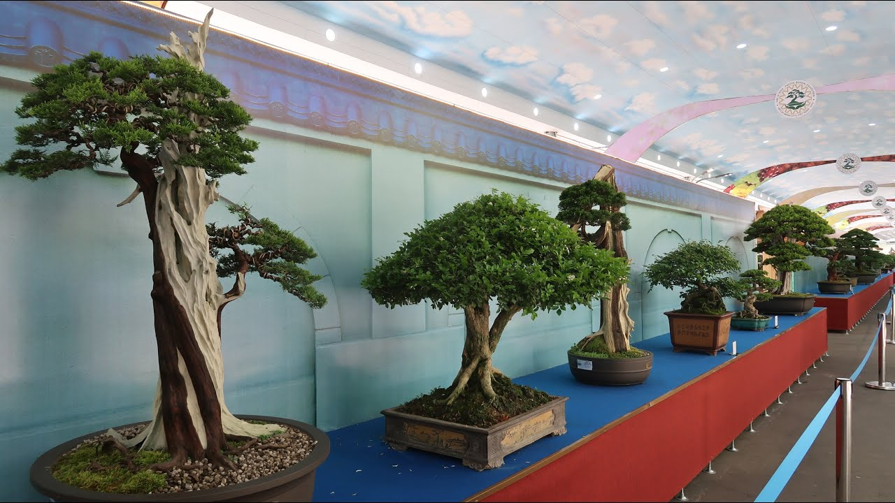Asia - Pacific Bonsai Exhibition 2019