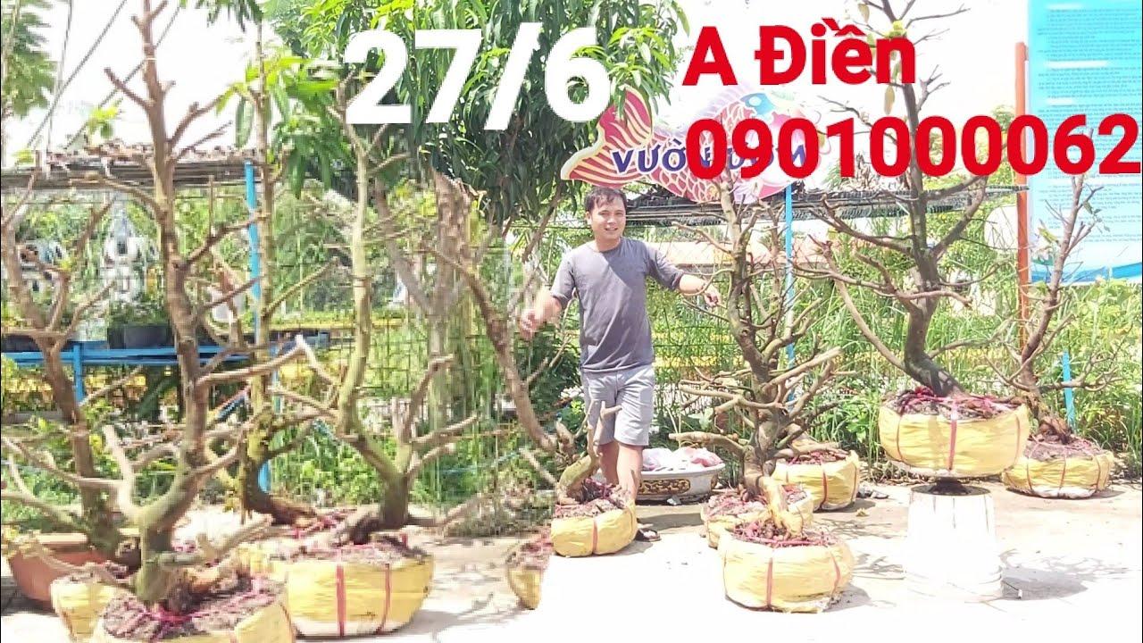 Báo giá lô mai vàng dáng thú gặp A Điền 0901000062 huyện Lai vung Đồng Tháp 27/6
