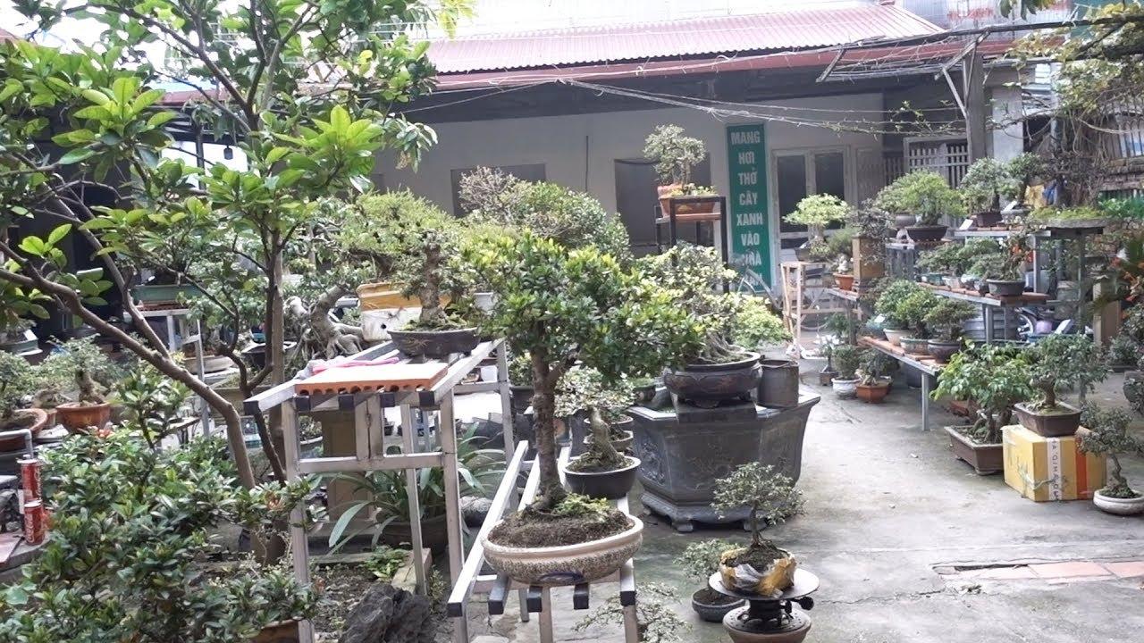 Báo giá từ cây vài trăm nghìn cho tới cây vài chục triệu, nhiều cây đẹp. Beautiful bonsai trees