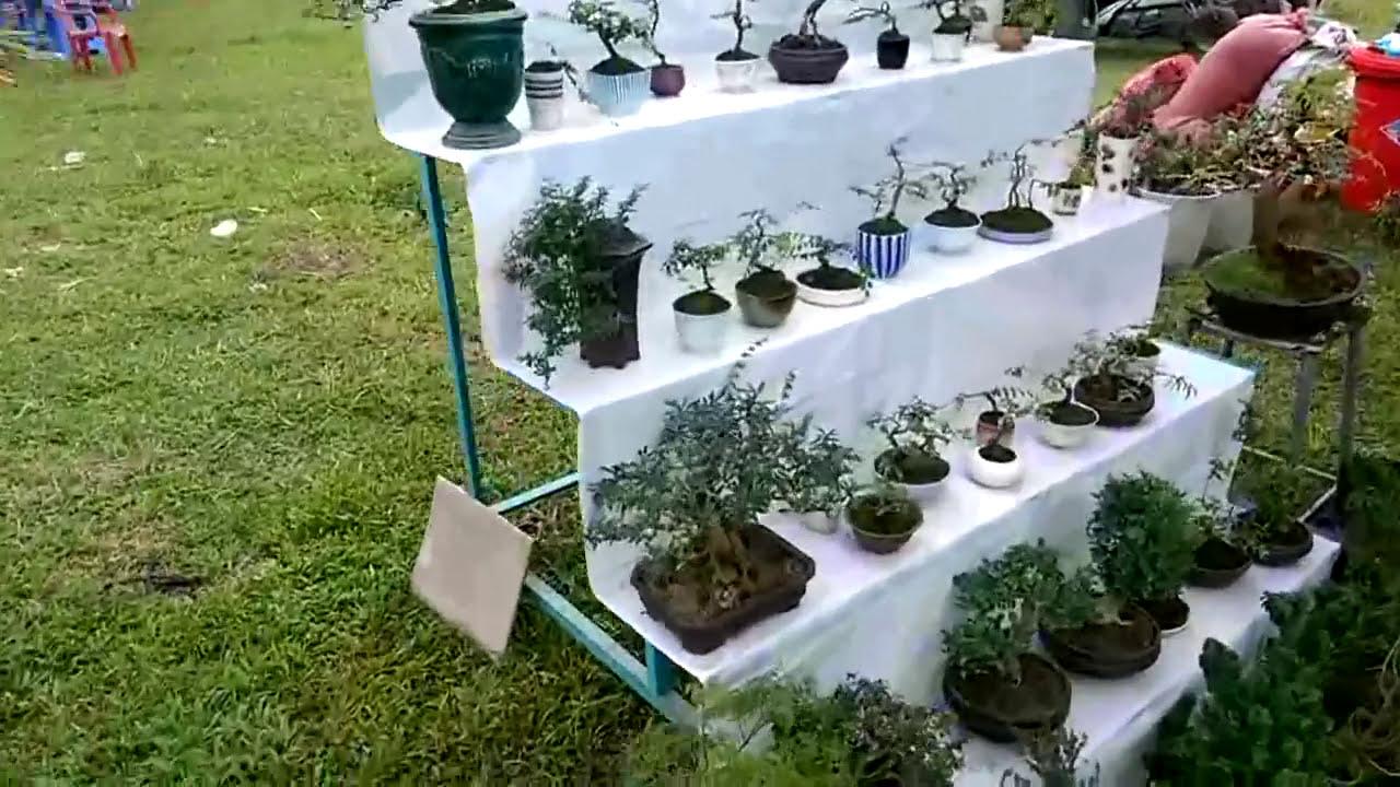 Bonsai tree   Cây cảnh đẹp tổng hợp 30