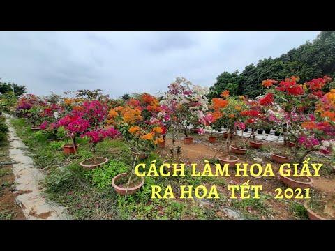 Cách làm hoa giấy ra hoa Tết 2021