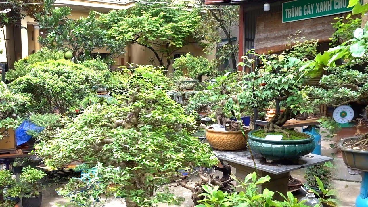 Cây đẹp mịn và tiểu cảnh giá rẻ - cheap and beautiful bonsai trees
