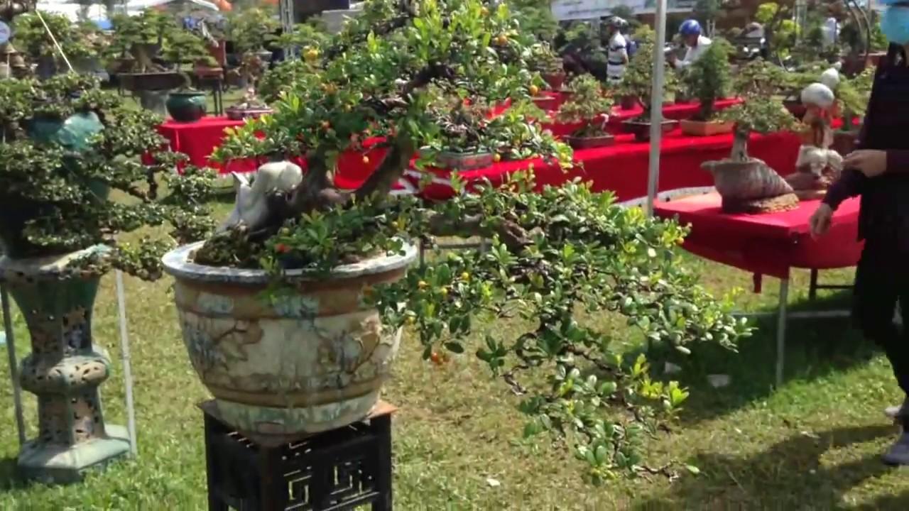 Cây hạ châu cho trái đẹp   Bonsai Binh Dinh