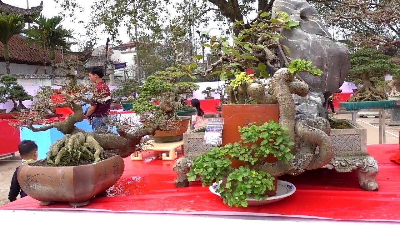 Đẹp mê ly, quái cực kỳ, lu hết ý - strange shape bonsai at bonsai exhibition